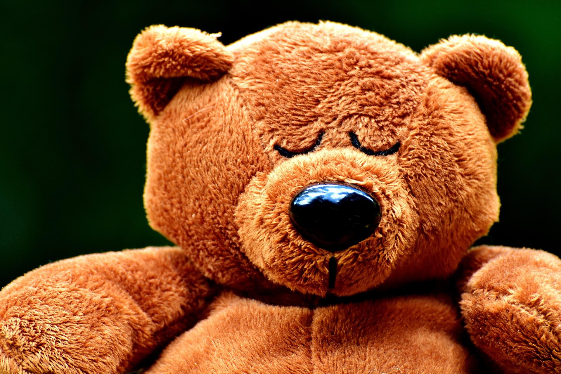 teddy-2468052_1920.jpg