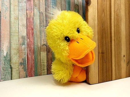 duck-3407432__340.jpg