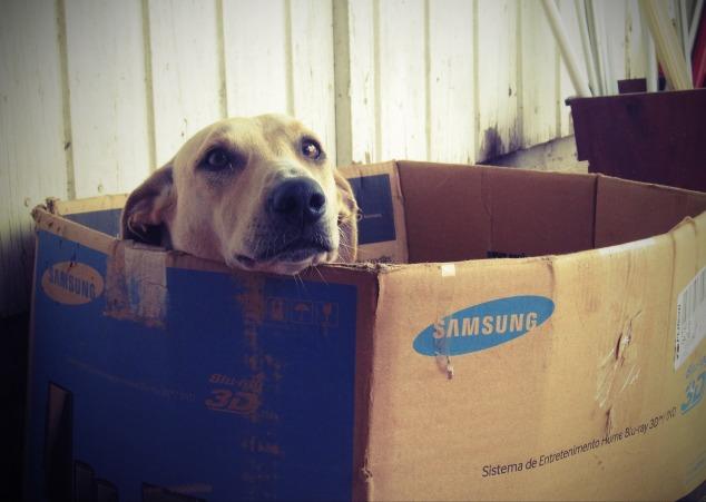 dog-660505_1920.jpg